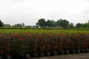 Eléments de haie cultivés en bacs (jusqu'à 175 x100x40 cm)