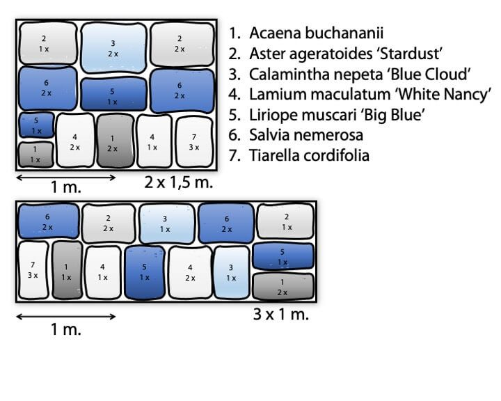 Plate-bandes ' bleu - blanc'