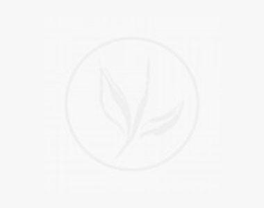 Houx crénelé 'Green Hedge' P9