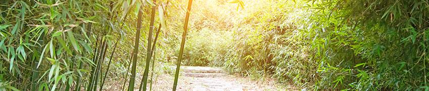 Acheter haie de bambou