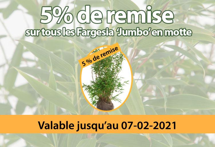 5% de remise sur tout les Fargesia 'Jumbo' en motte