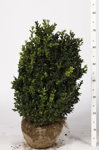 plantes avec mottes