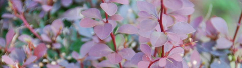 Acheter en ligne des plantes de jardin