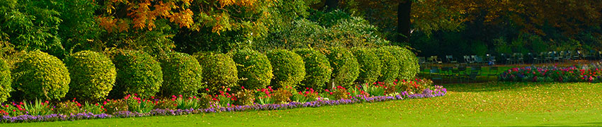 Choisir le bon nombre de plantes de haies